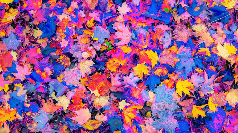 Rainbow Leaves