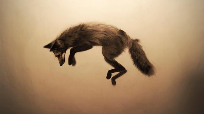 El cuento del zorro
