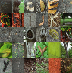 Alphabet in Nature