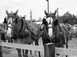 The Springfield Fair Horse Show