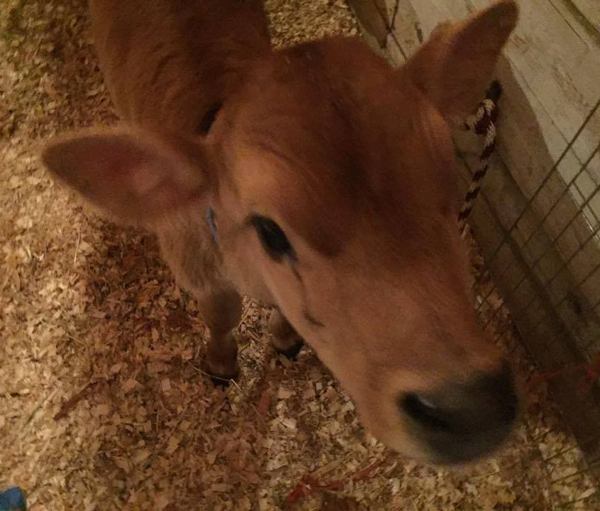 Livestock!