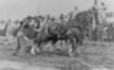 The springfield fair horse pulls post card vintage horse pulls