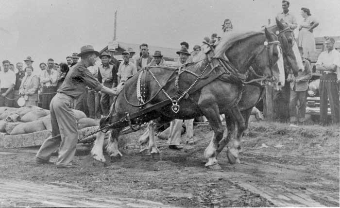 The Historic Springfield Fair
