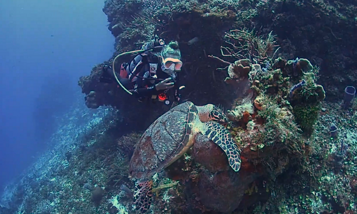 turtle and diver.png