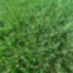 The Heath Artificial Grass