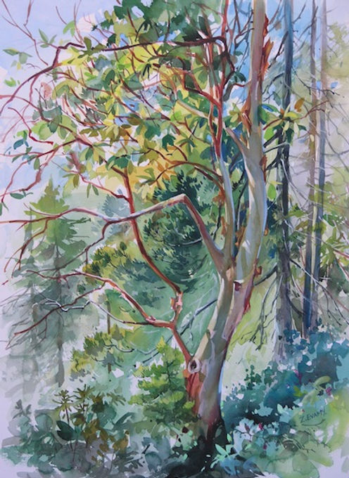multi-colour watercolour painting titled SOLD- West Coast Arbutus by artist zoe evamy