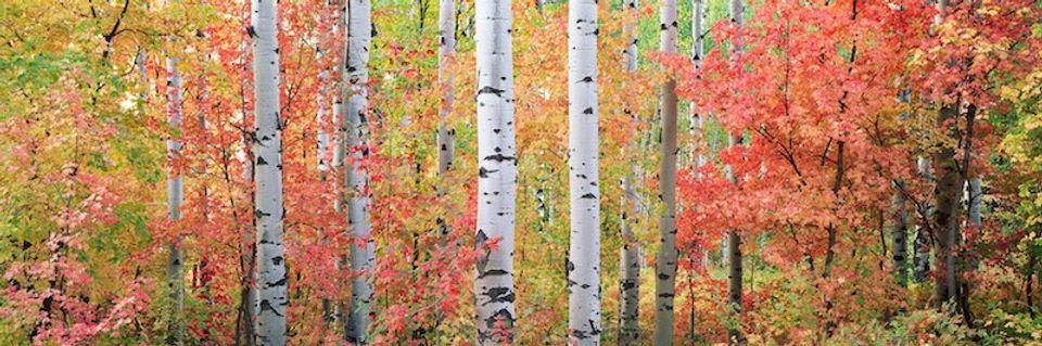 photograph mounted on dibond aluminum titled Autumn Forest Light by artist steven friedman.