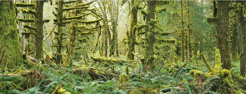 photograph mounted on dibond aluminum titled Moss and Ferns and Maples by artist steven friedman.