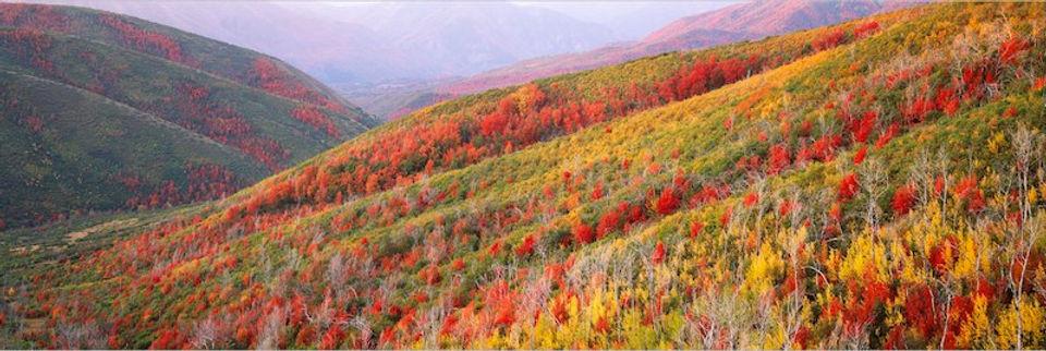 photograph mounted on dibond aluminum titled Painted Hills by artist steven friedman.