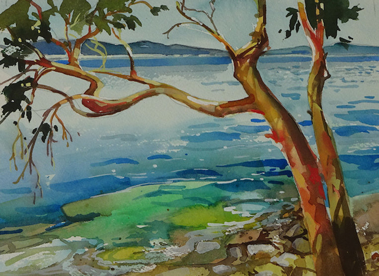 multi-colour watercolour painting titled SOLD- Arbutus Sketch by artist zoe evamy