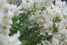 白い花のグループ