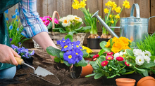 Essential Spring Gardening Tasks