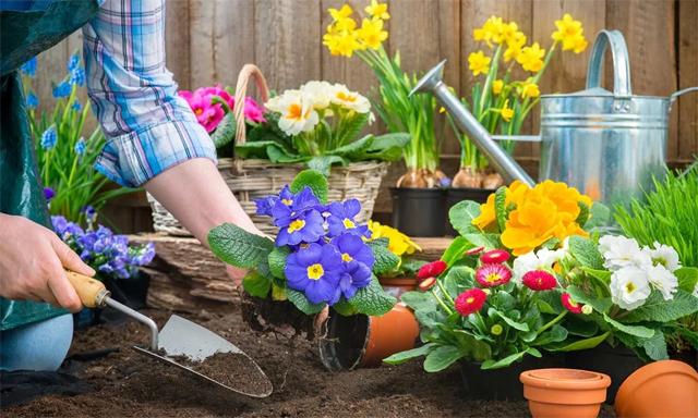 Essential Spring Gardening Tasks