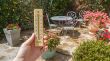 How to look after your garden during a heatwave