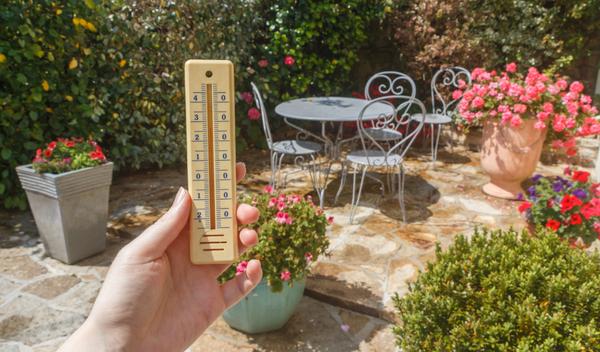Garden Survival Tips Choice