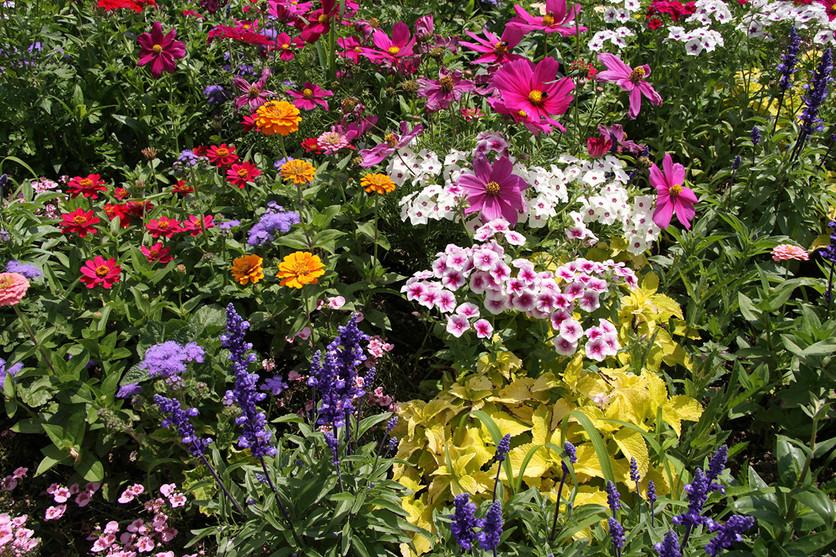 Gardening Tips for April