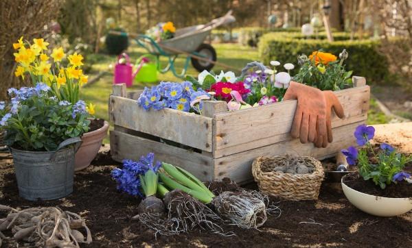 Choice Summer Gardening Tips