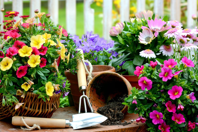 Simple Suggestions for your Garden this May