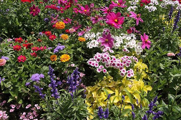 Flowers Gardening Tips for April