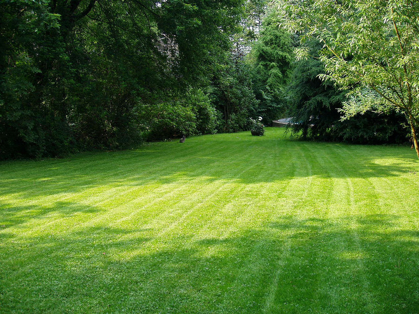 Caring for your lawn this Summer
