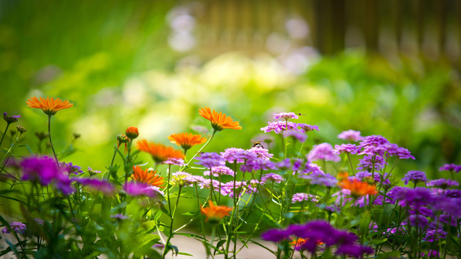 How to Prolong Your Gardens Flowers & Plants This Summer