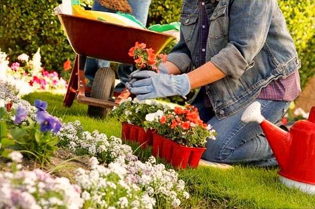 Tips to Manage your Garden this Summer