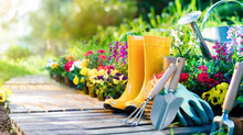 Essential Gardening Tips for May