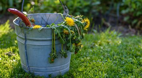 Garden Maintenance Tips for February