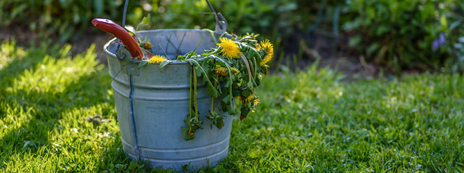 Garden Maintenance Tips for February