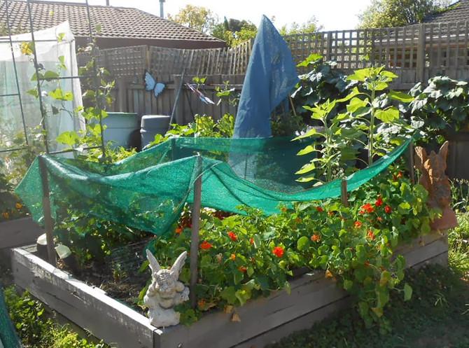 Garden Survival Tips During a Heatwave