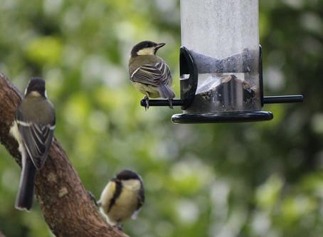 Tips for feeding the birds in your garden