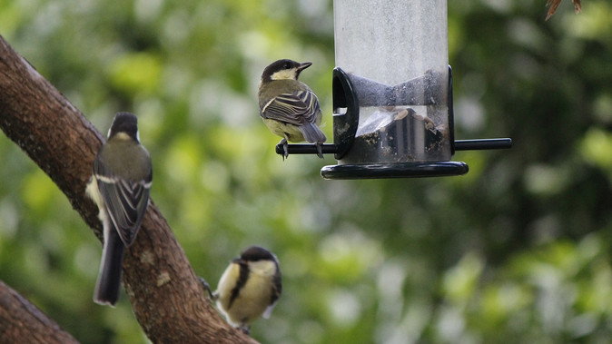 Tips for feeding the birds in your garden