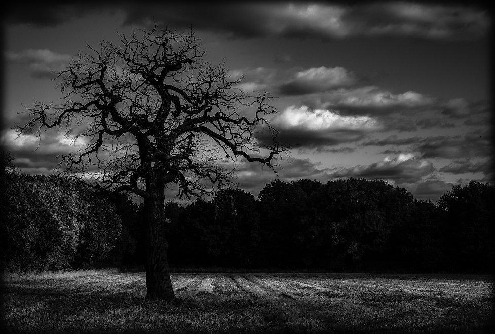 crooked tree.jpg