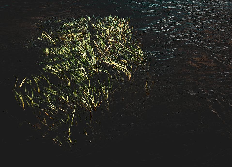 reeds 1.jpg