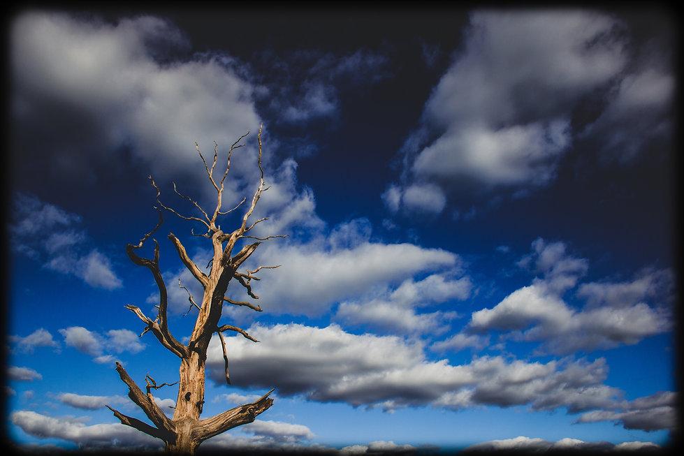 tree wide screen.jpg