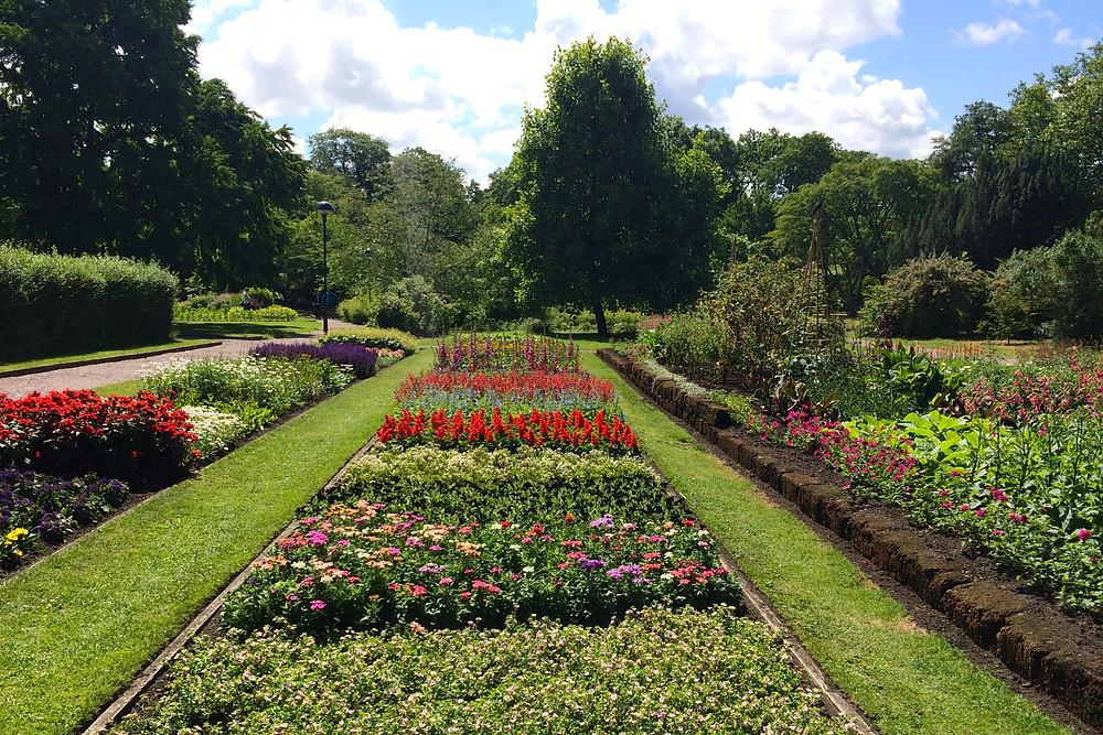 Botaniska_trädgården_-_Blomster.JPG