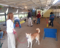 קורס טיפול בעזרת בעלי חיים - מקצוע עם משמעות
