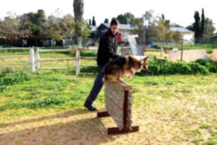טיפול בעזרת כלבים בבתי ספר
