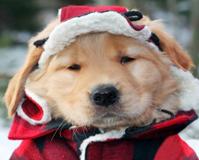 איך לשמור על הכלב בחורף?