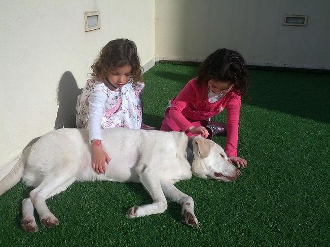 טיפול בהפרעות קשב באמצעות כלבים