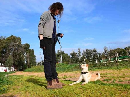 אילוף כלבים ומטרותיו
