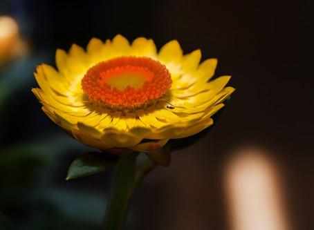 Primavera: le allergie