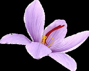 Etnopharma nasce nel 2000 dalla farmaceutica della Torino degli anni '50 e dalla ricerca farmacologica per l'Industria di un laboratorio autorizzato, negli anni '90, dal MURST (Ministero dell'Università e della Ricerca Scientifica e Tecnologica) e dal MAF (Ministero Agricoltura e Foreste).