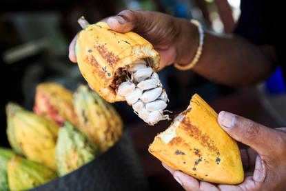 frutto cacao