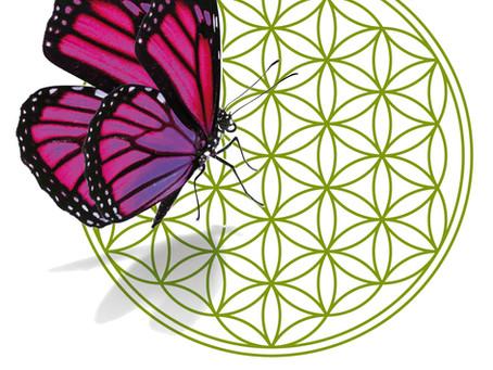 Le farfalle di Etnopharma sanno come curarsi