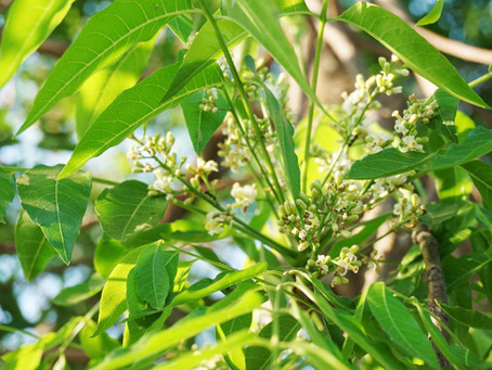Resistenza delle piante al virus