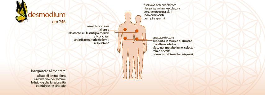 desmodium, etnopharma, a base di demodium e rosmarino per favorire le fisiologiche funzionalità epatiche e respiratorie, asma bronchiale, antinfiammatori delle vie respiratorie, epatoprotettore, metabolismo, colesterolo, oberità,  riduce l'assobimento di grassi