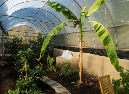 Building Hyperadobe walls in the Transition from Hydroponics to Semi-Tropical Fruit