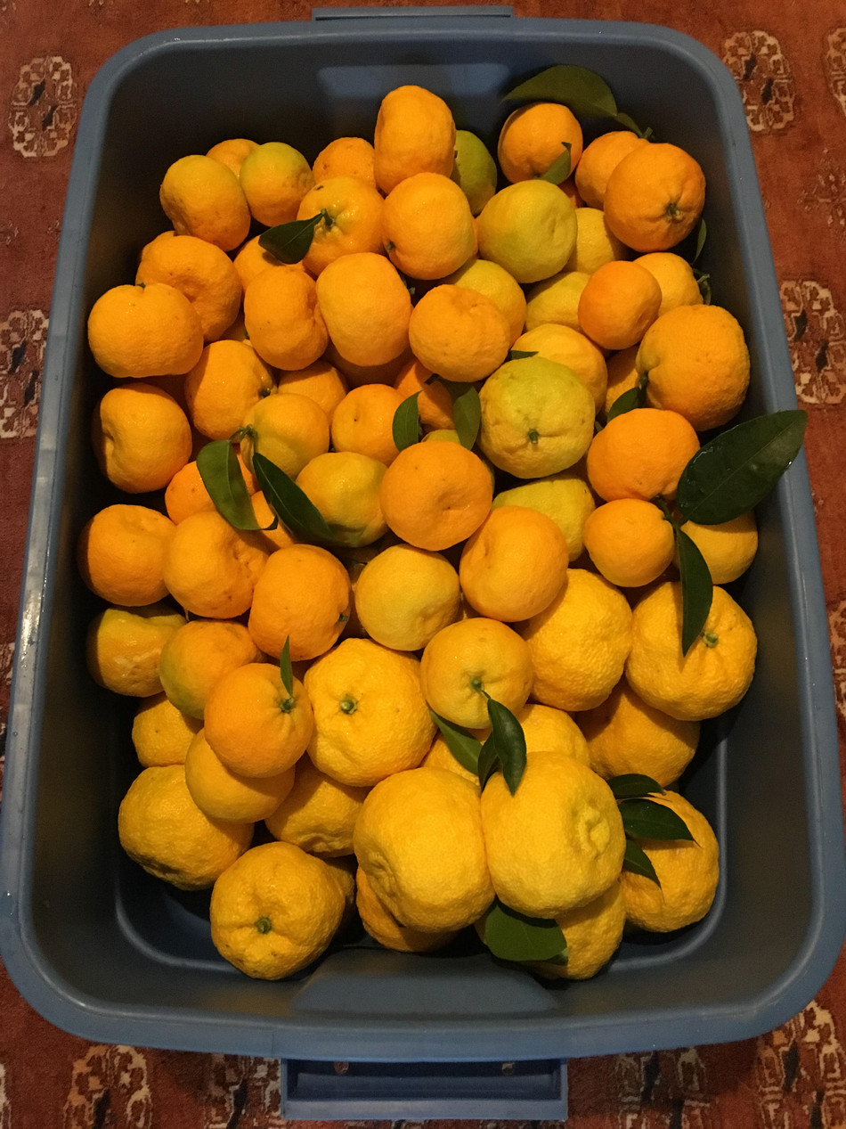 Selling Citrus (by the seashore)