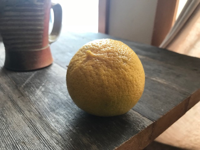 Bergamot fruit ripe under the tree